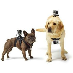 Gopro Fetch (dog Harness) Ass. Gopro Cameras found in Generic Cameras & Generic Accessories. Code: ADOGM-001